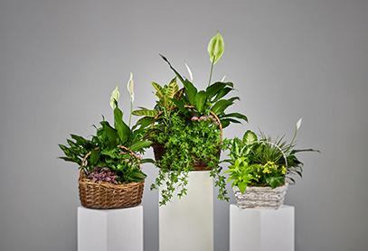 Plants 1 - Home